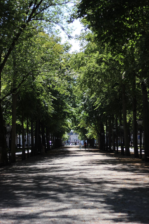 Lange Voorhout is een laan in Den Haag tussen twee rijen met bomen en klassieke lantaarnpalen.
